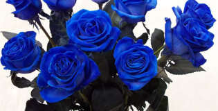 Нетрадиционен букет от сини рози